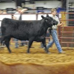 Youth show livestock in annual show