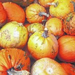 Fall is here, break out the pumpkins