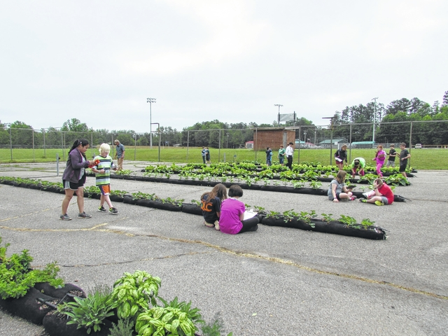 Courtney Elementary, how does your garden grow?