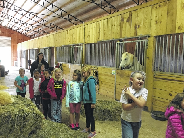 Students learn about Arabian horses